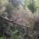Toppling Trees